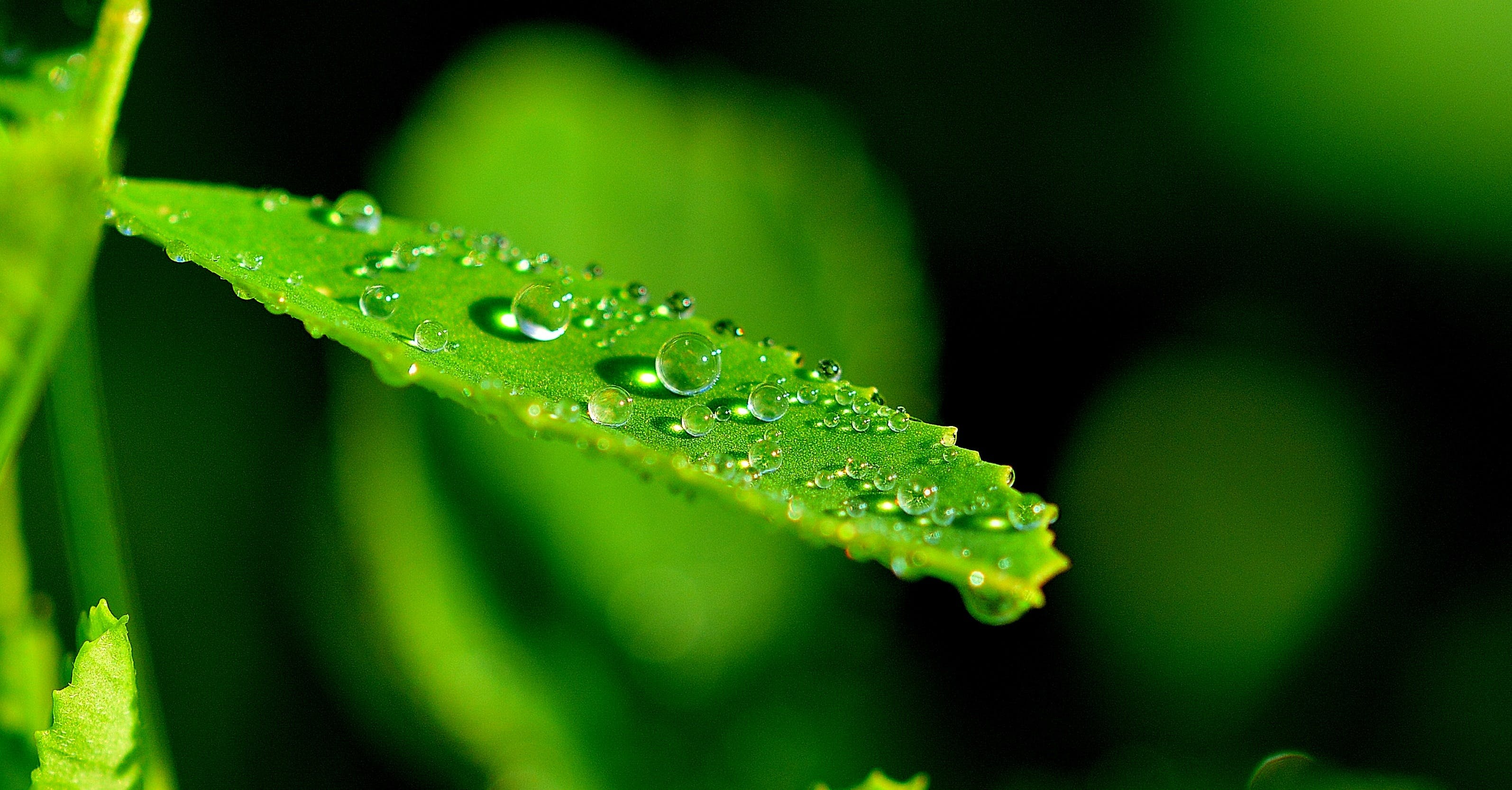 Droplets on Green Leaf in Close Up Photograph