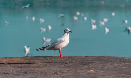 Seagull On Concrete Surface