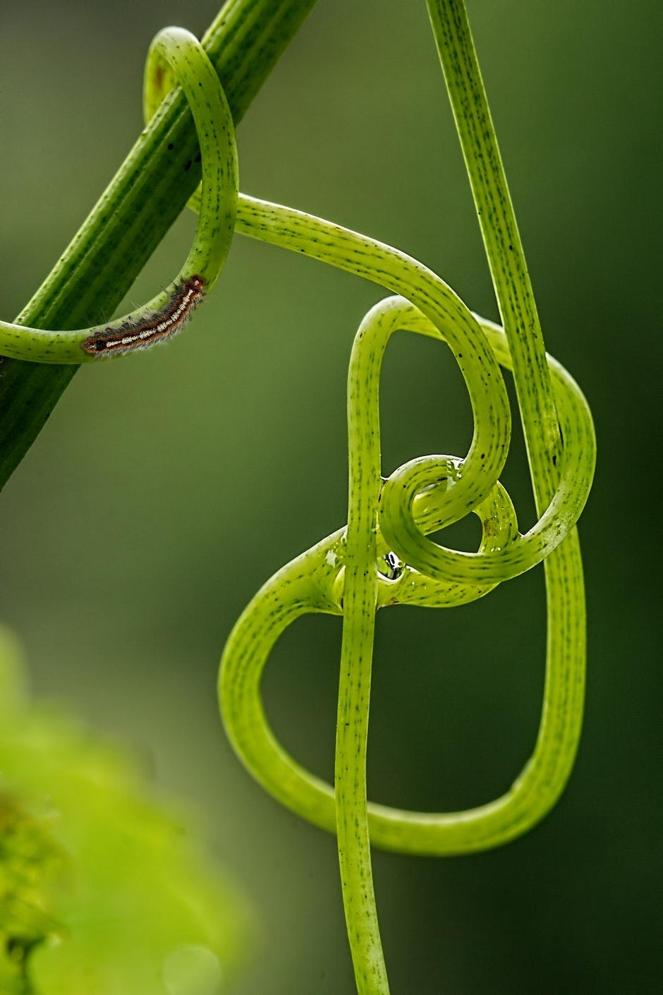 caterpillar, close-up, green
