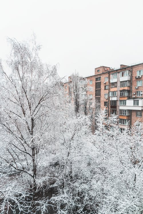 冬季, 在雪中的树木, 對比, 小路 的 免费素材图片