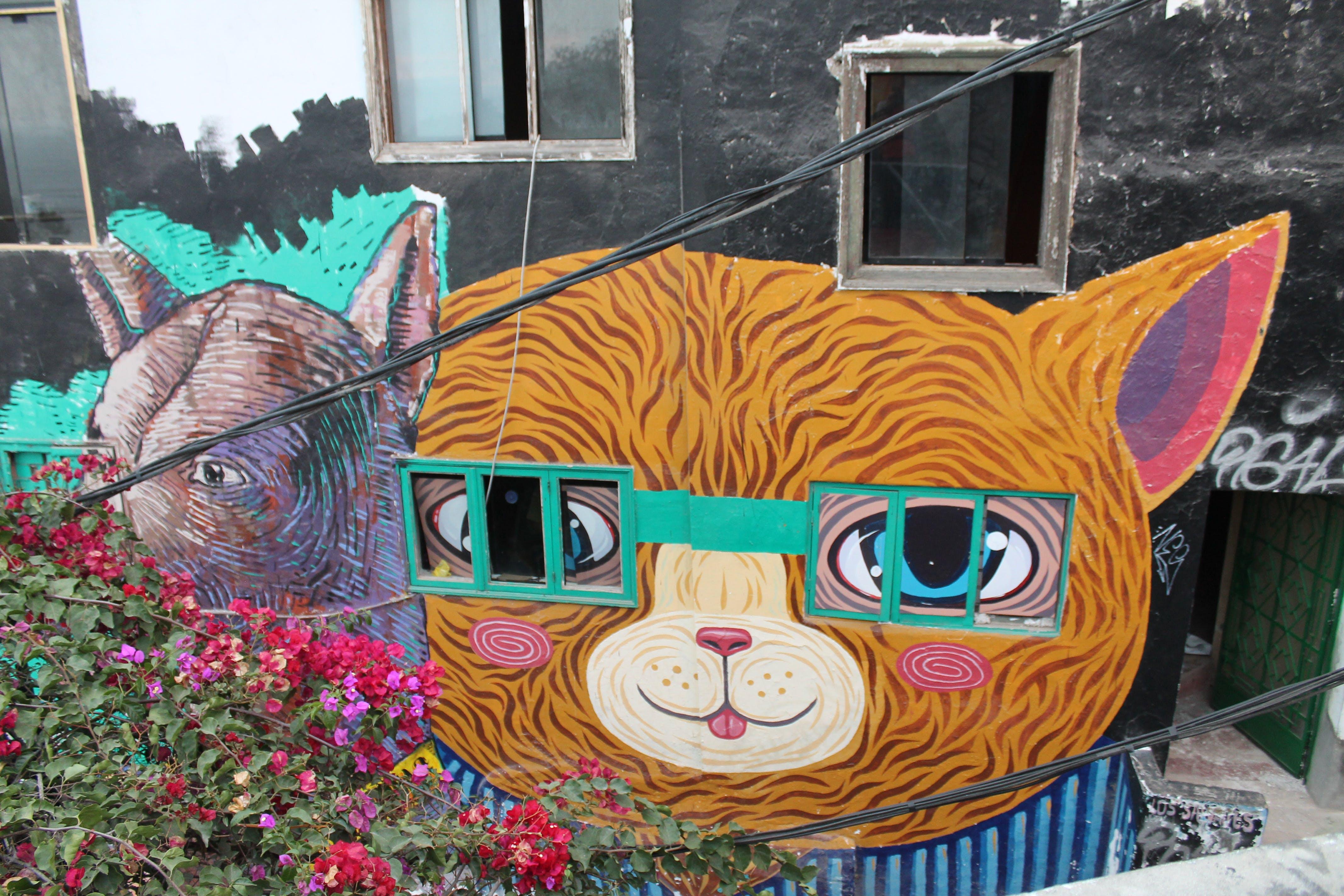 Free stock photo of window, glasses, cat, streetart