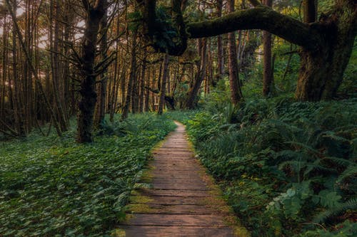 Brown Wooden Pathway in the Middle of Green Grass and Trees