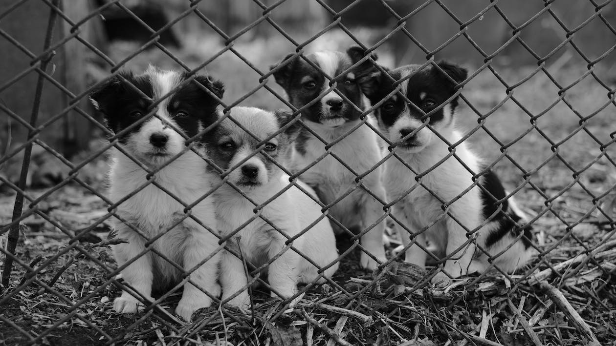White and Black Short Coat Small Dog on Grey Metal Fence