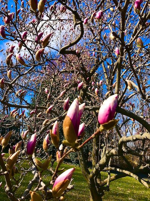 Free stock photo of spring flower, spring flowers, springtime
