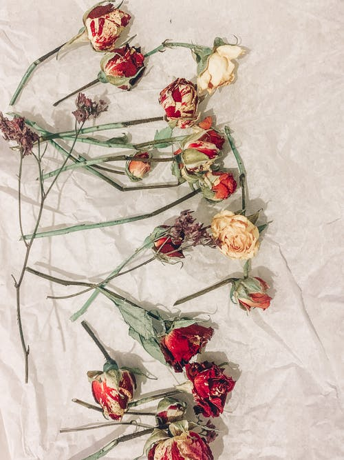 Yellow and Red Dried Roses on White Textile