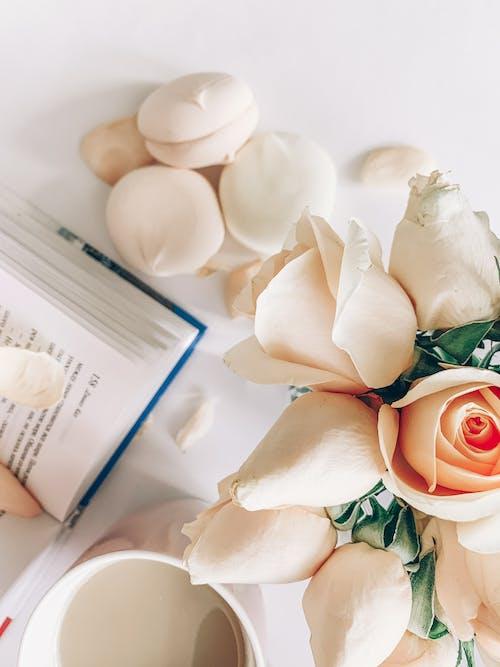 꽃이 피는, 꽃잎, 맛있는, 술을 마시다의 무료 스톡 사진