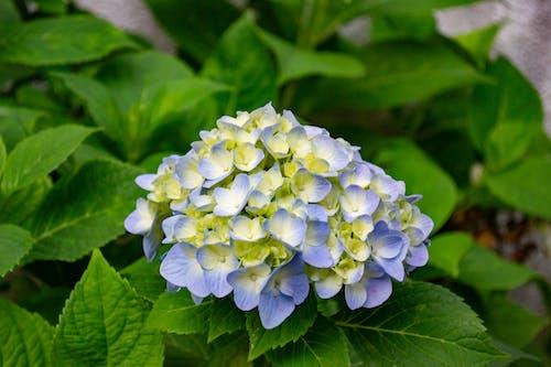 çiçek, doğa, doğada güzellik, flor içeren Ücretsiz stok fotoğraf