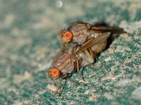 Botflies Mating Close Up Photography