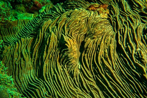 Brown and Green Moss in Close Up Photography