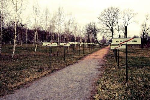 Photos gratuites de abandonné, accident, arbres, chornobyl