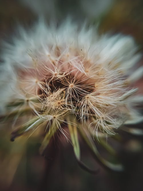 Kostenloses Stock Foto zu blume, blüte, blütenstaub, flora