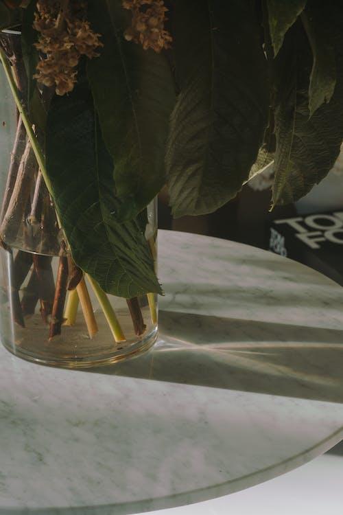 インドア, ガラス花瓶, フローラの無料の写真素材