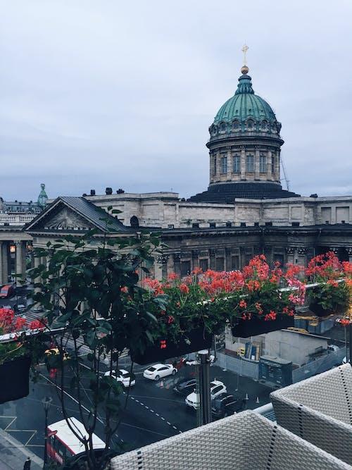 Free stock photo of balcony, cityview, flowers, gray sky