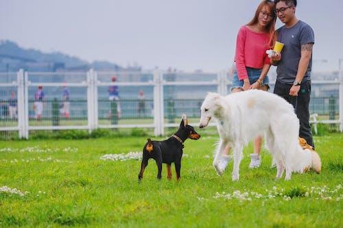 一對, 公園, 狗, 白色 的 免費圖庫相片