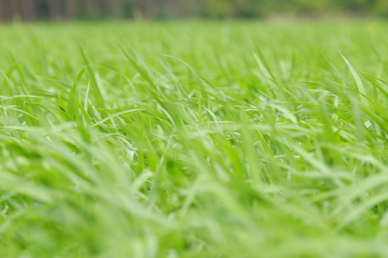 Green Grass Under Sky