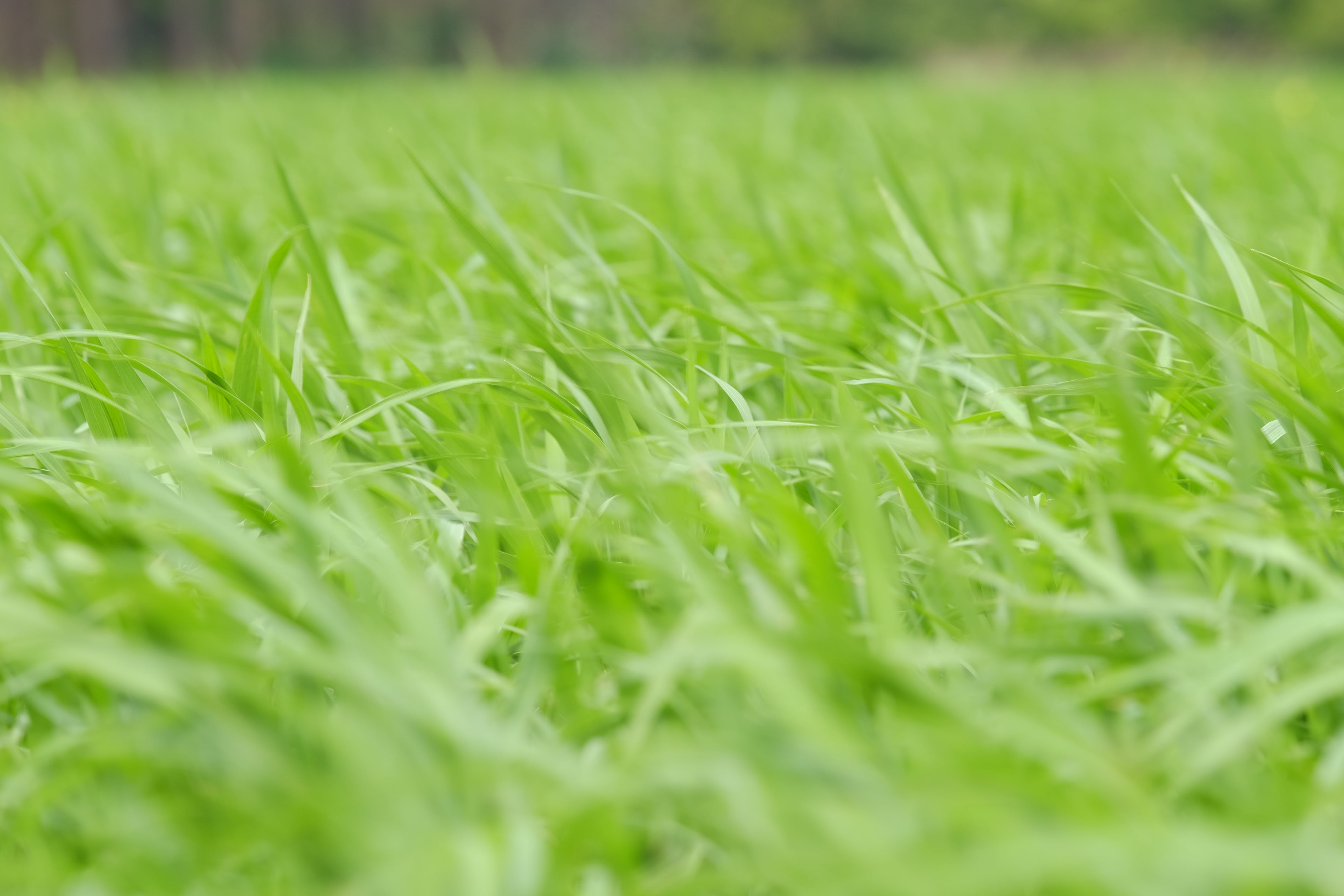 close-up, field, grass