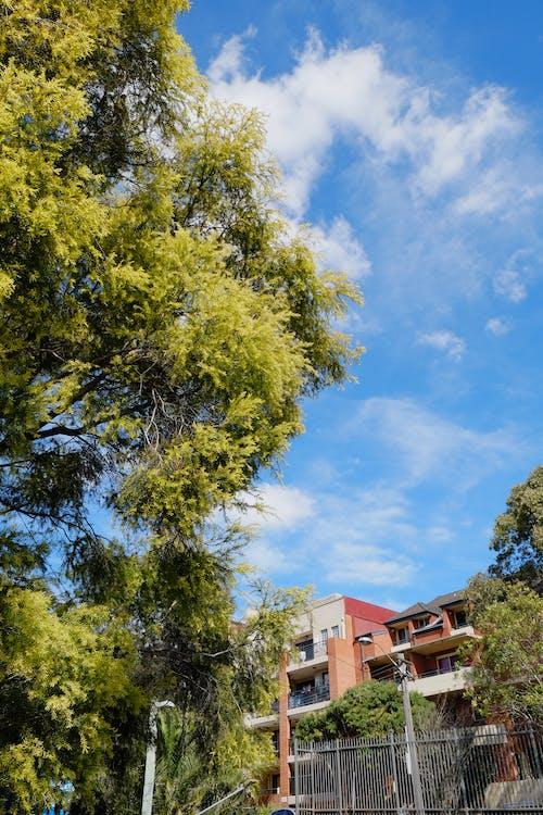 Безкоштовне стокове фото на тему «дерево, небо, Сонячний, хмара»