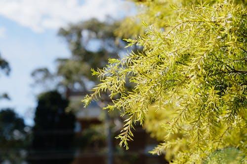 木, 緑の無料の写真素材