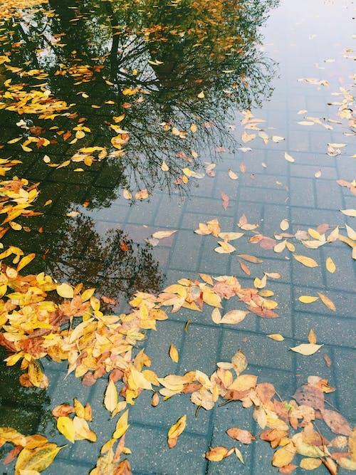 Free stock photo of autumn, autumn colors, autumn leaf, autumn leaves