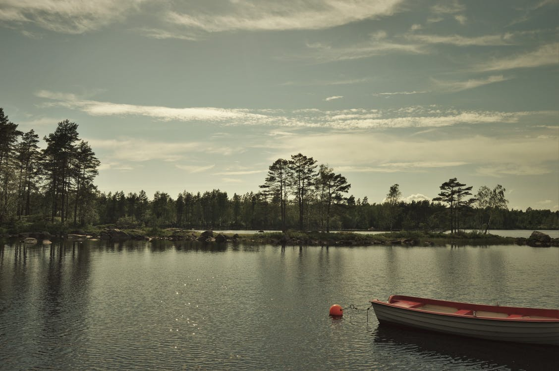 Безкоштовне стокове фото на тему «вода, дерева, дерево»