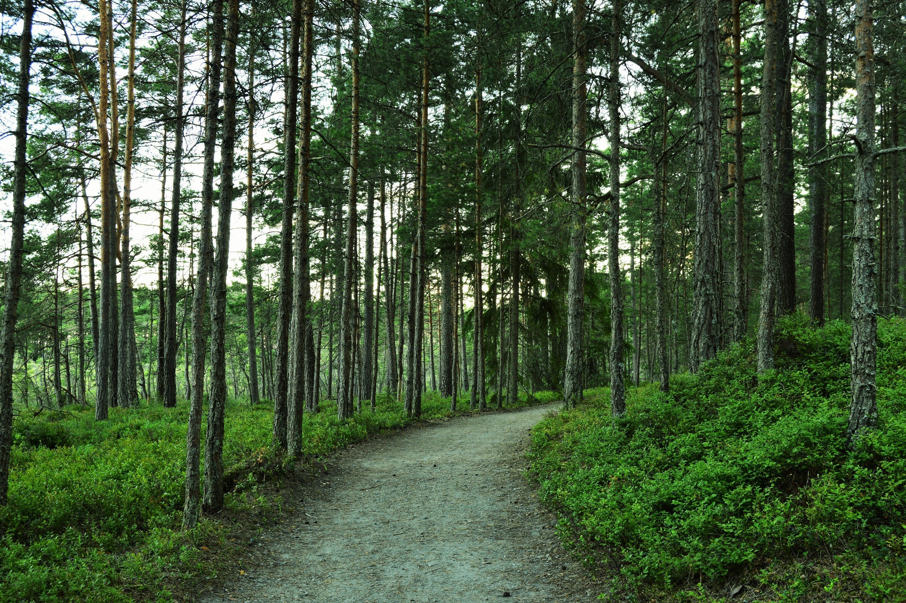 Free stock photo of forest, green, nature, road