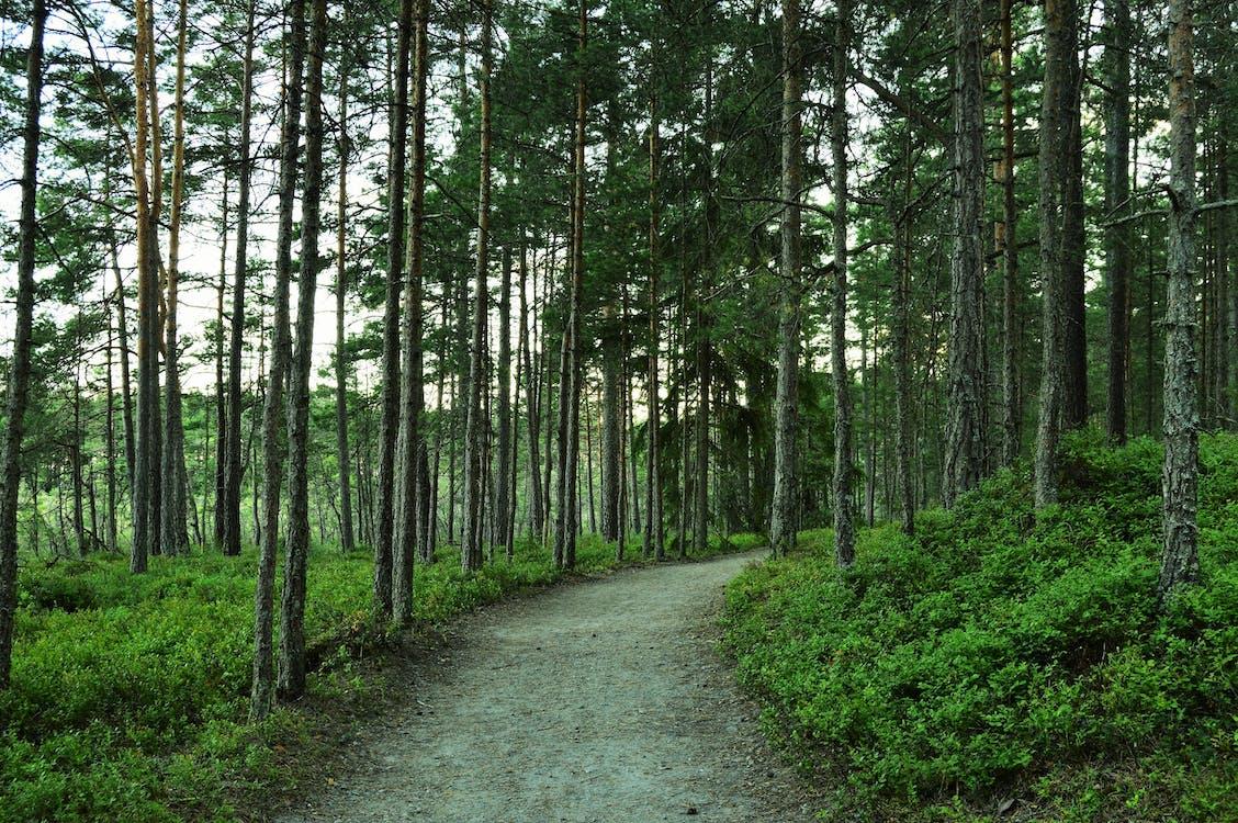 Fotobanka sbezplatnými fotkami na tému cesta, les, leto