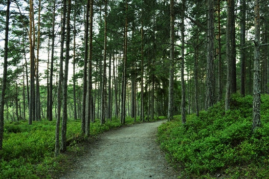 Free stock photo of road, nature, summer, forest