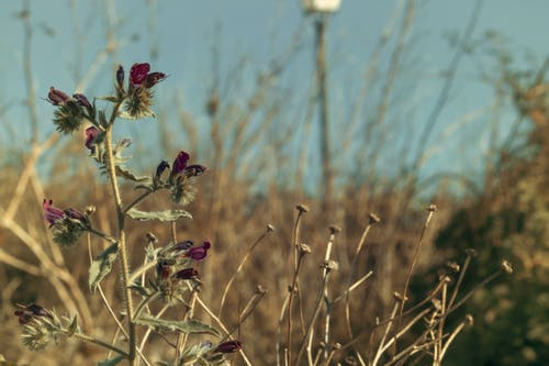 Gratis lagerfoto af belleza en la naturaleza, campo verde, cielo, planta
