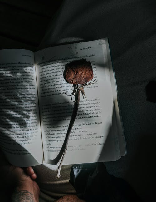 Brown Flower on Book Page