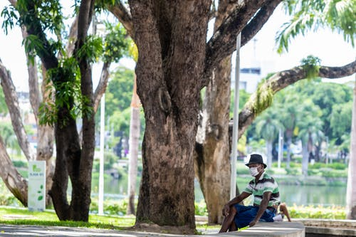 Man in Blue Shirt Sitting on Bench Under Tree