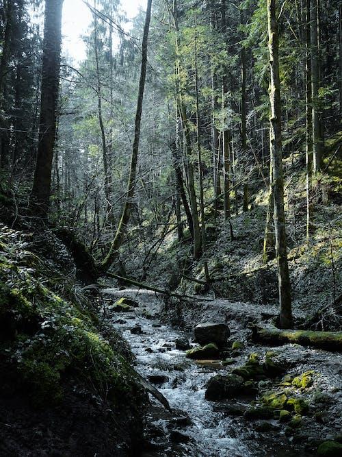 Δωρεάν στοκ φωτογραφιών με βουνό, βράχια, βρύο, γραφικός