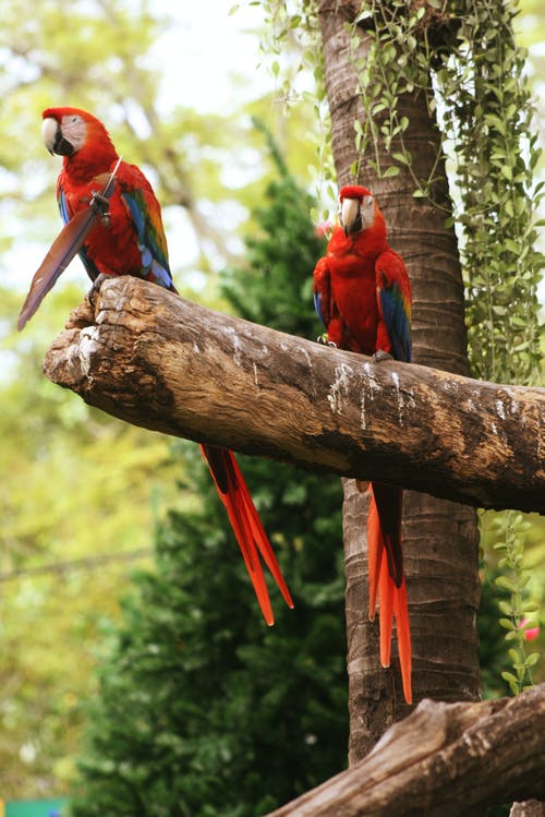 Red and Blue Macaw on Brown Tree Branch