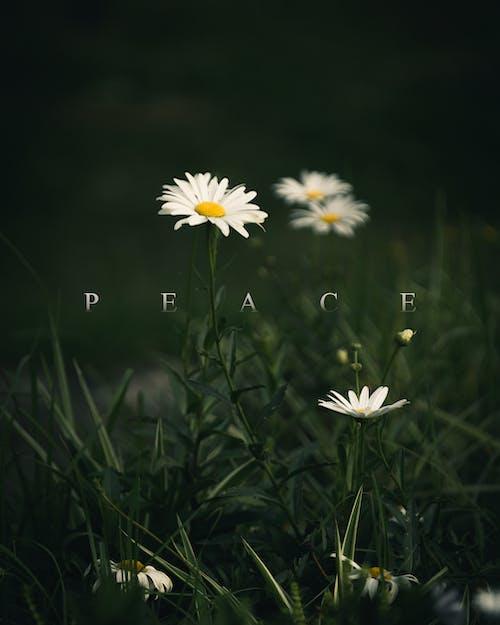 Základová fotografie zdarma na téma kytka, mír, zelená