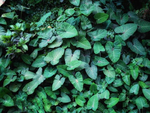 Free stock photo of aquatic plants, green, Green Plant, jungle