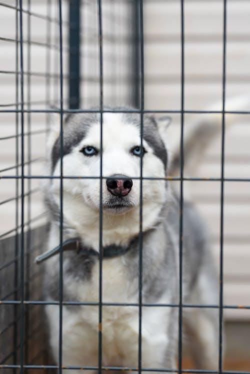 動物, 動物攝影, 可愛, 哺乳動物 的 免費圖庫相片