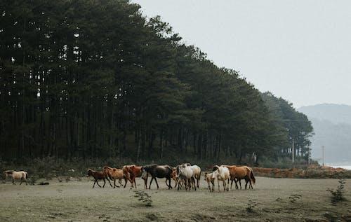 Horse Herd Near Trees