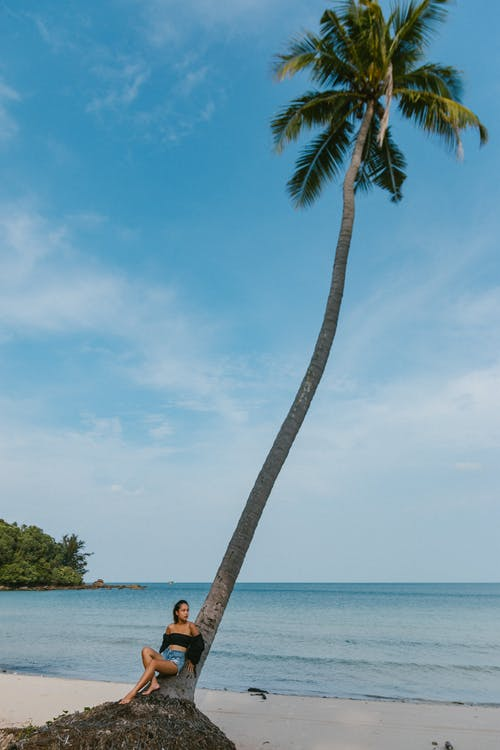 Woman Seated Under Tall Coconut Tree