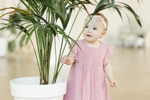 Girl in Pink Dress Holding Green Plant