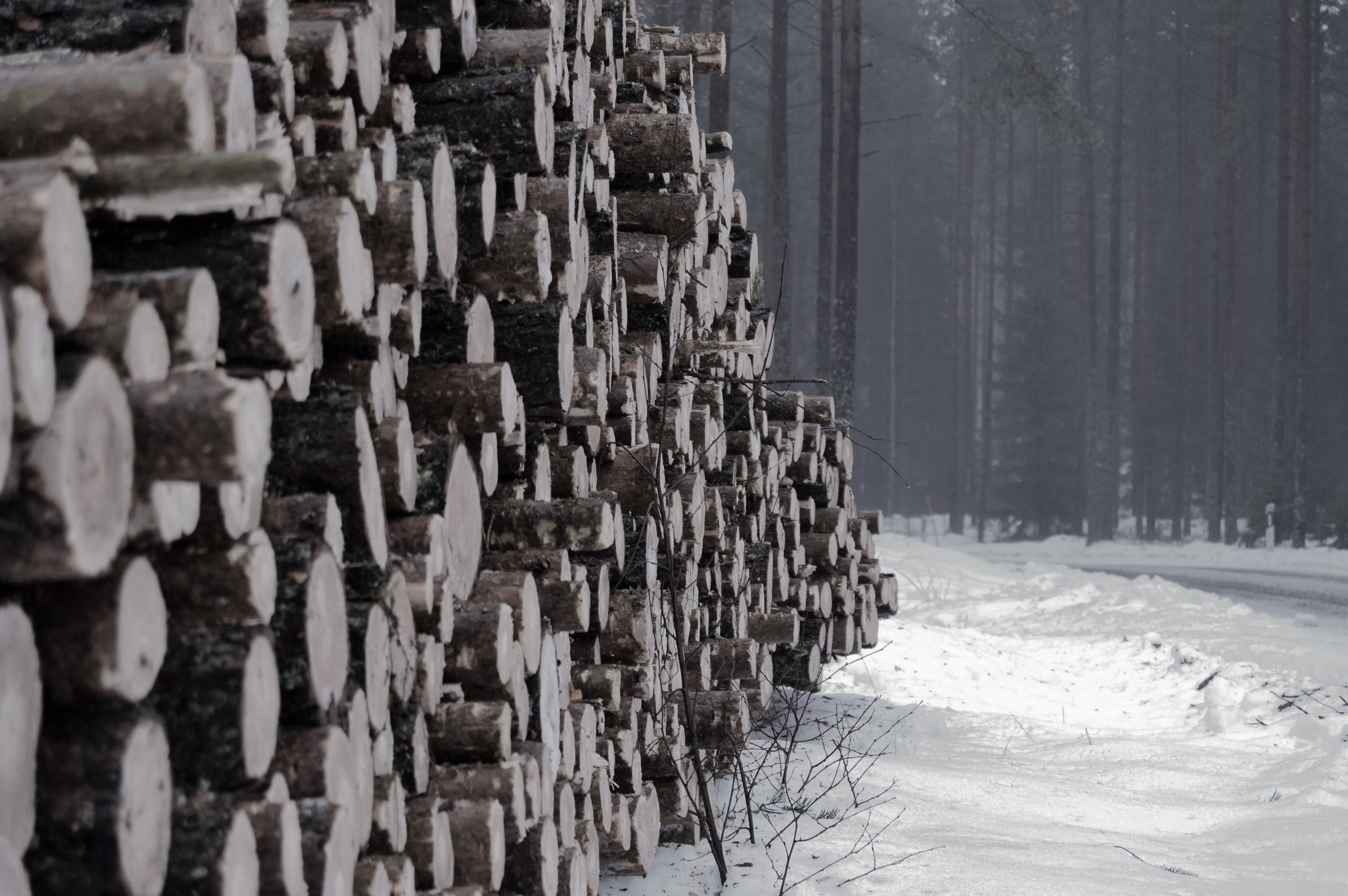 Free stock photo of forest, logs, lumber, nature