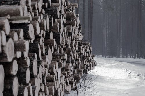 Free stock photo of forest, logs, lumber