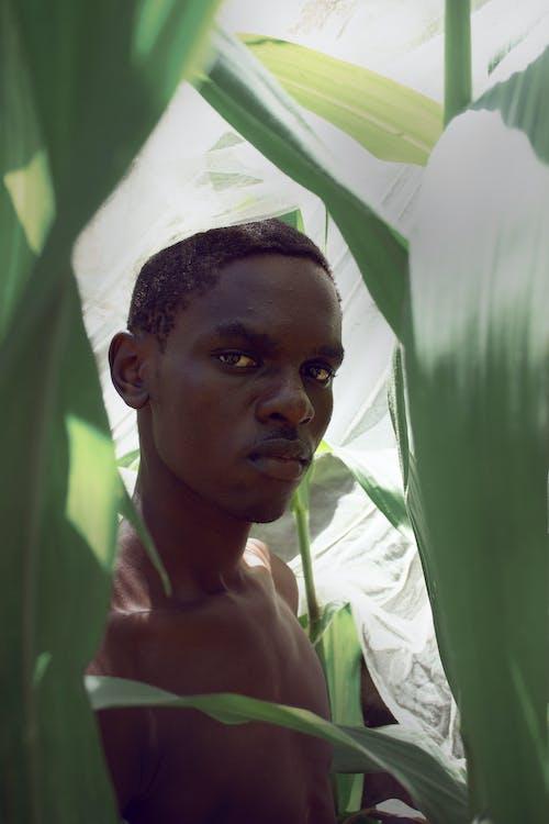 アフリカ産, おとこ, ケニアの無料の写真素材
