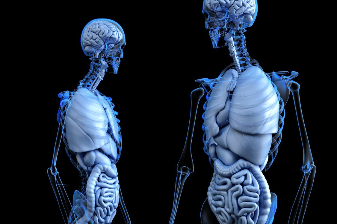 3d illustration, 3d rendering, abdomen