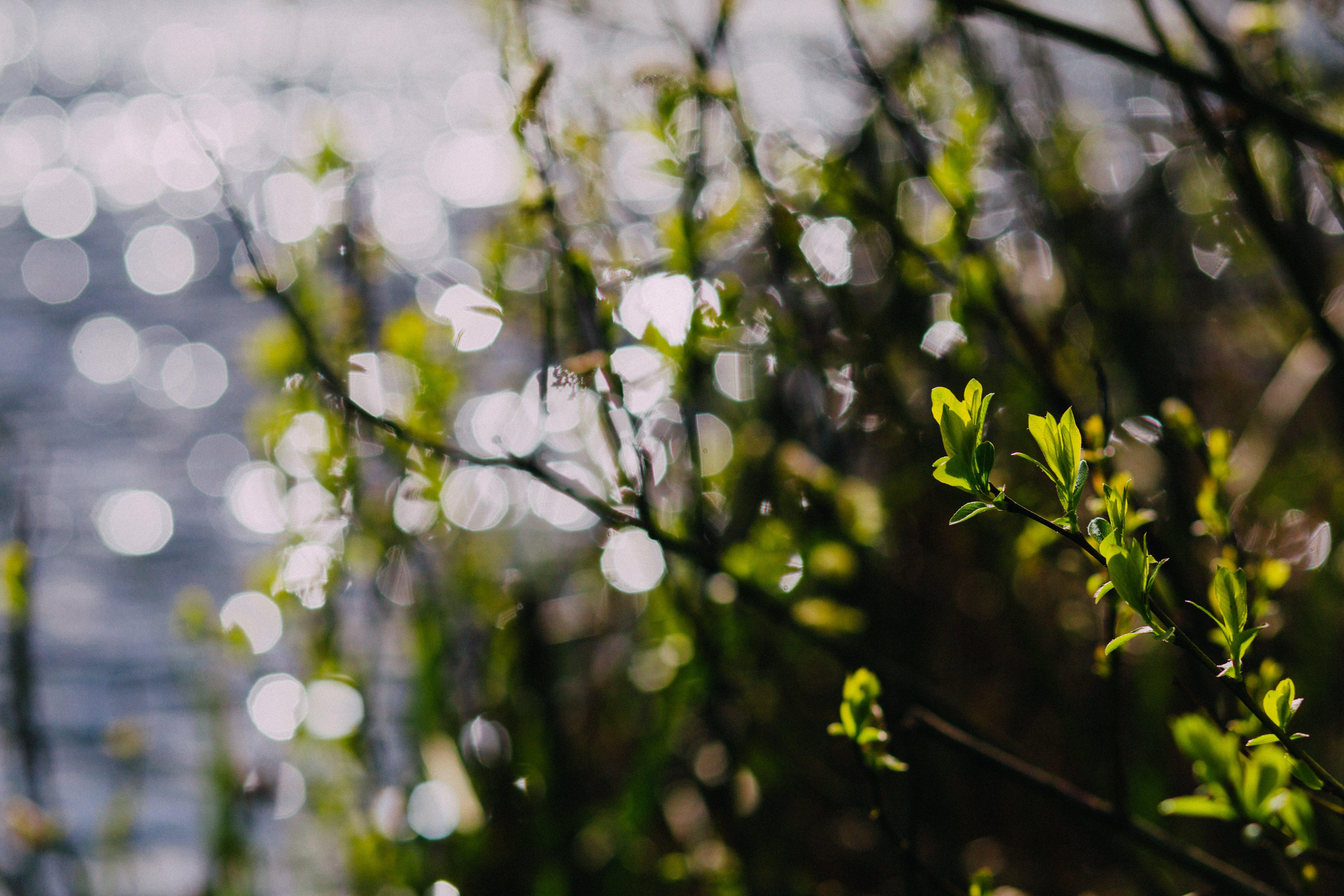 Fotos de stock gratuitas de agua, crecimiento, efecto desenfocado, jardín