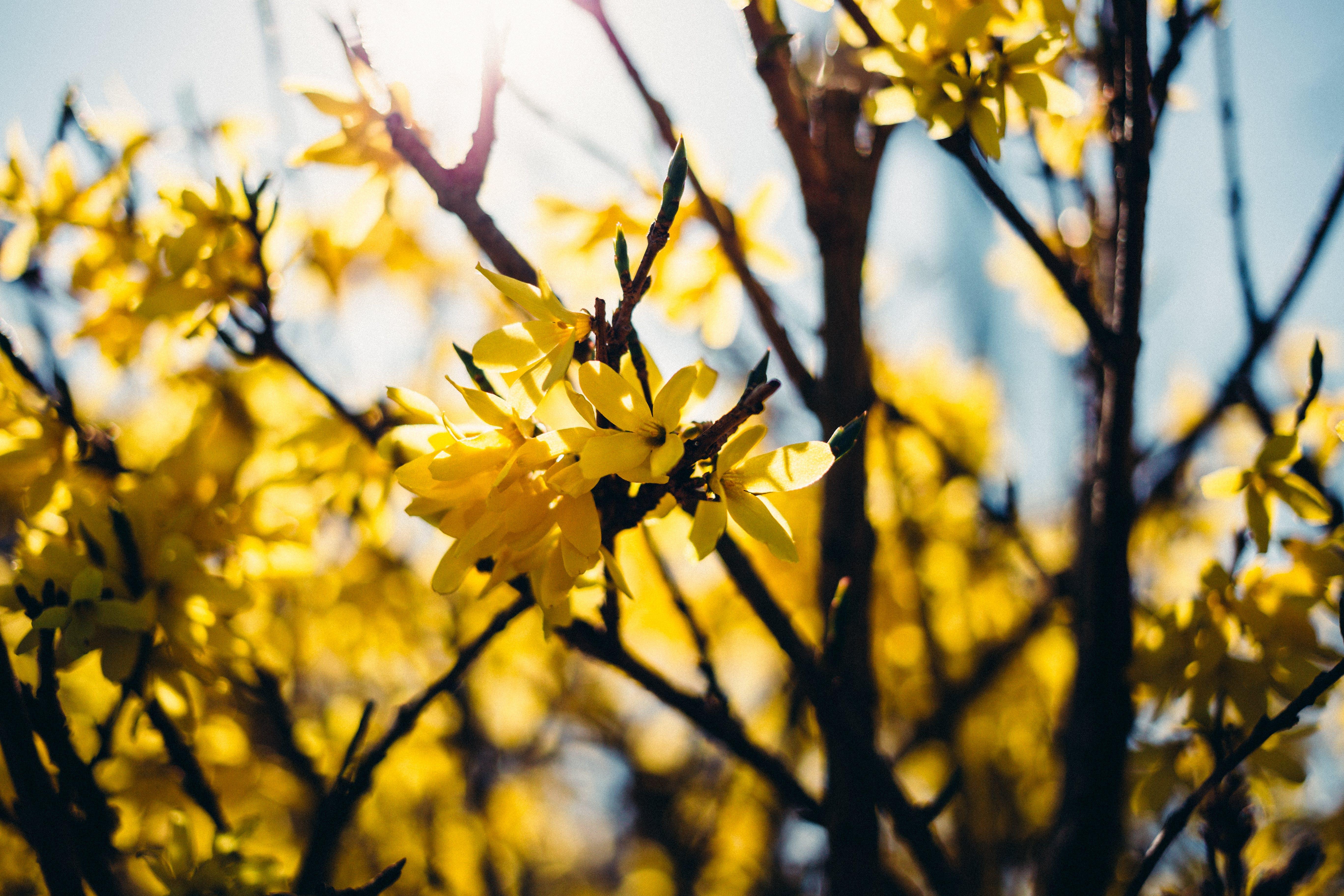 Gratis arkivbilde med blå himmel, blomster, dagslys, flora