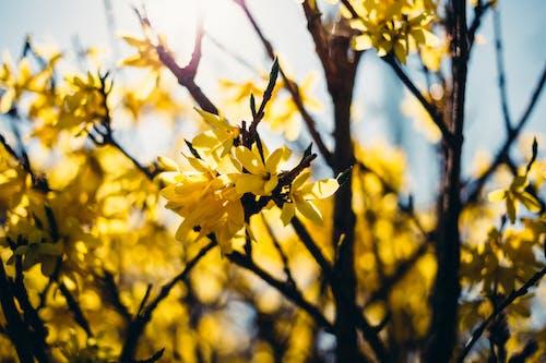Foto stok gratis alam, bunga-bunga, cabang, cerah