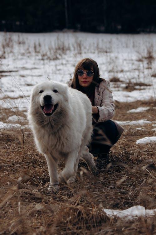 冬季, 冷, 動物, 哺乳動物 的 免费素材图片