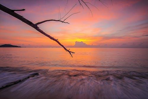 Gratis arkivbilde med bølger, daggry, grener, hav