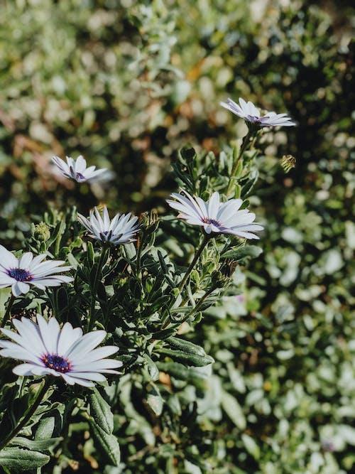 Gratis lagerfoto af blade, blomster, flora, kronblade
