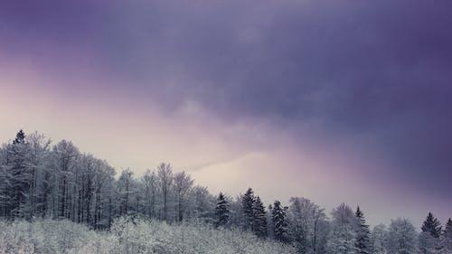 Gratis lagerfoto af himmel, skov, Smuk