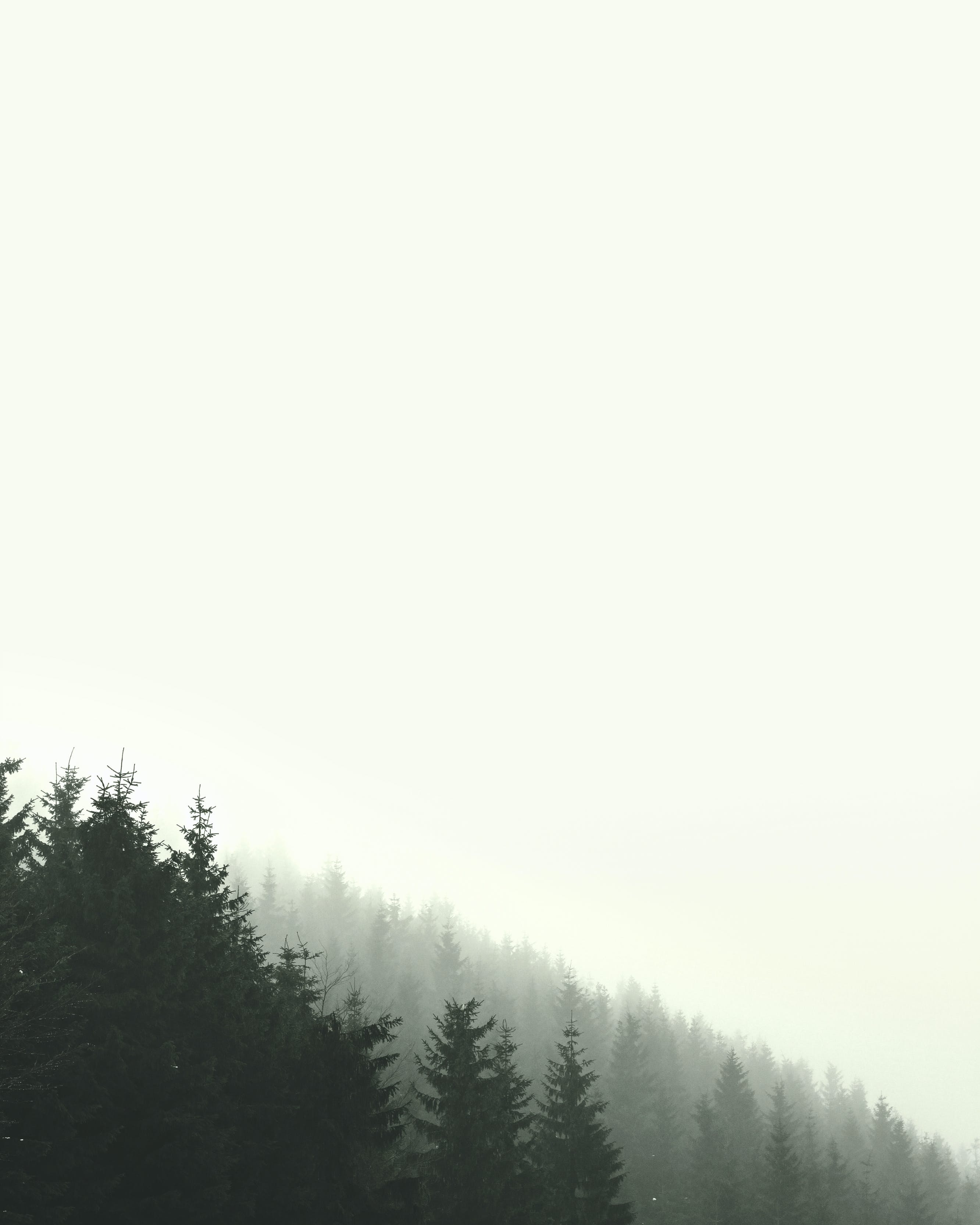 Free stock photo of sky, forest, fog, wallpaper